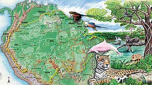 El Congreso brasileño ha aprobado el pasado 26 de abril la legislación forestal que deja a la región del Amazonas y otras importantes áreas sin protección ambiental y otorga una amnistía a los individuos acusados de deforestación ilegal en el pasado.