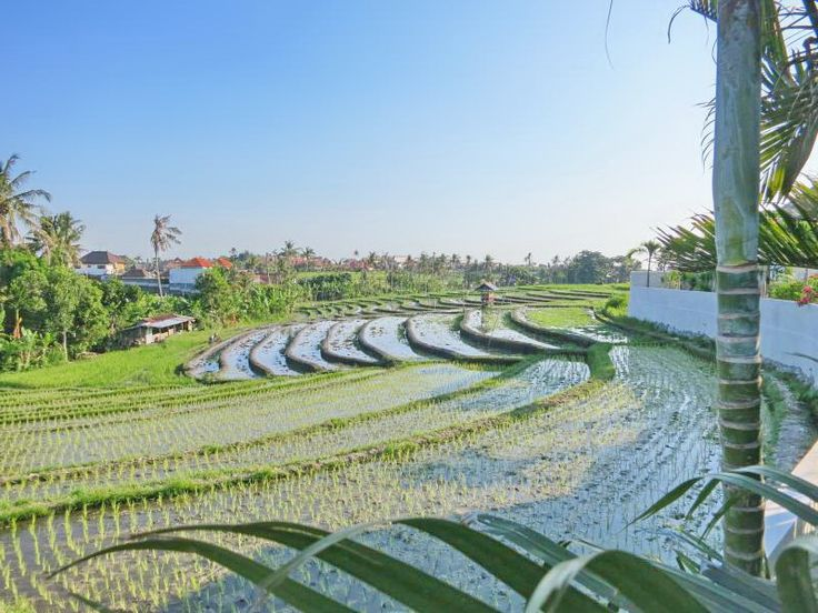Villa Yali | 3 bedrooms | Canggu #Bali