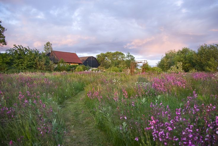 The garden meadow of Susan Trolle, Bornholm, Denmark. Photo Sophia Callmer