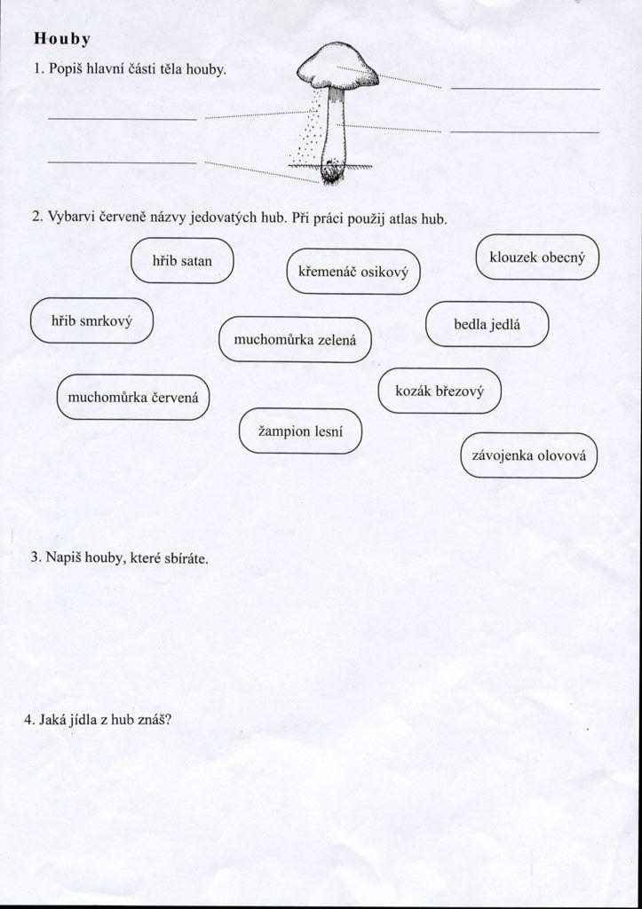 Výsledek obrázku pro houby pracovní listy