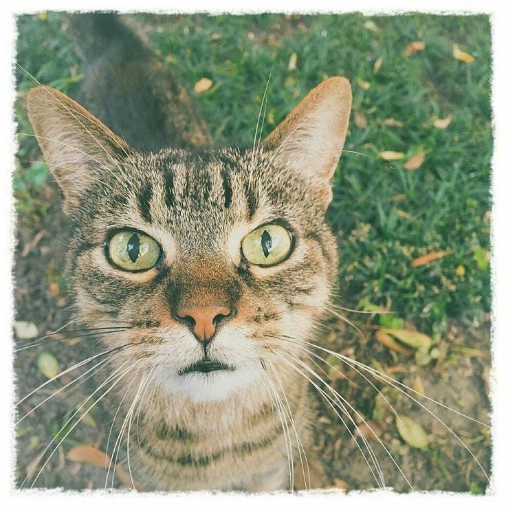 . るんるるーん . お忍び探検はたーのしいニャーン . ふんふふんふぉっっっ . ななぜゆえに僕の居場所が . #迷い猫捜索隊 #青天の霹靂 #petsallright