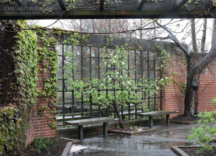 151 Best ESPALIER Images On Pinterest   Garden Ideas, Espalier Fruit Trees  And Vegetable Garden
