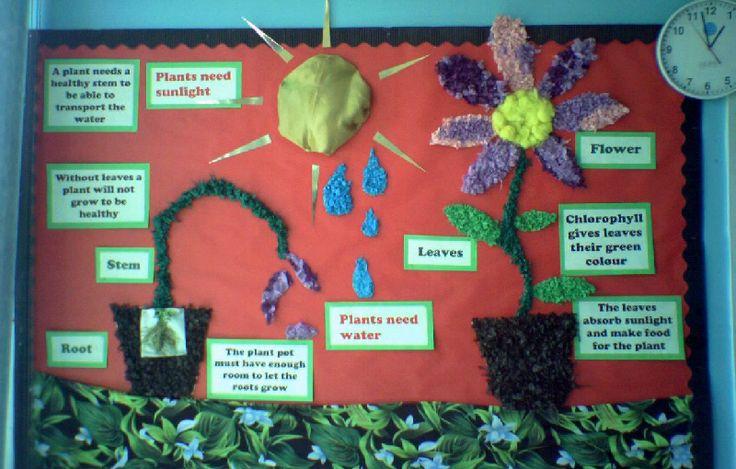 Plants classroom display photo - Photo gallery - SparkleBox