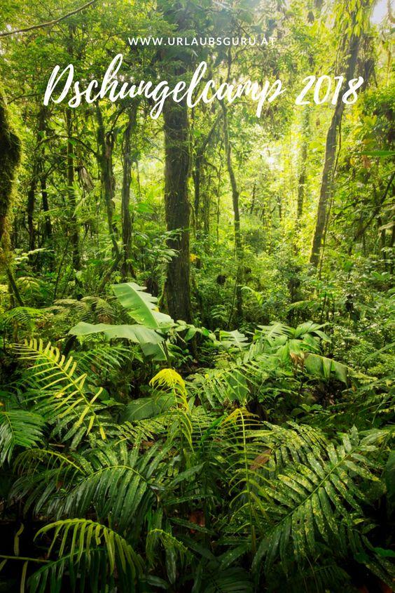 Ich verrate euch alle Infos rund um das Dschungelcamp 2018.