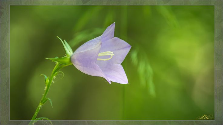 Flower in the Wild by Ambar Elementals on 500px