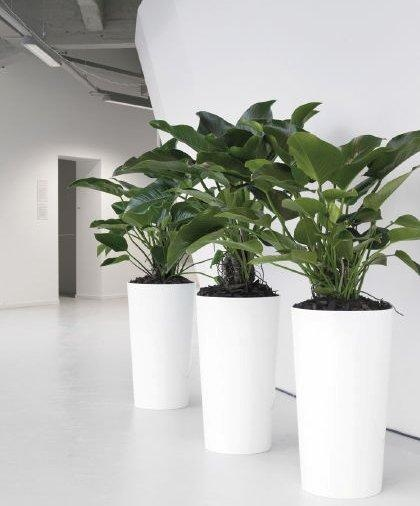 101 best images about office garden on pinterest office for Indoor greenery ideas