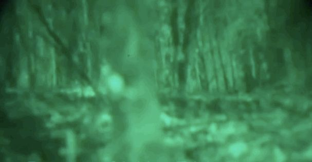 Is Bigfoot Real? Some Researchers Say Definitely With New Videos