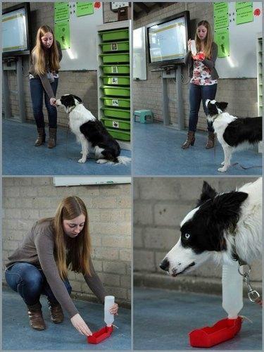 #Obs #Harlekijn #Cuijk | Hond Doris was op bezoek in de klas. Zijn baasje heeft verteld hoe je een hond moet opvoeden en verzorgen. Maar het werd nog leuker toen Doris zijn kunstjes mocht doen!