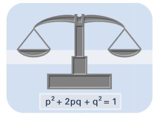 Population Genetics : Hardy - Weinberg Law, spent a lot of time with this equation.