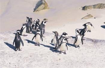 Cape Explorer-Self Drive   Simply South Africa Holidays