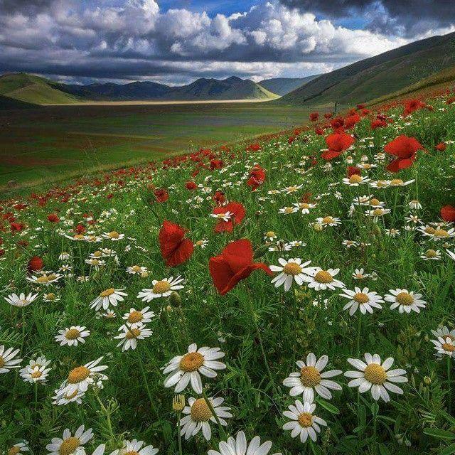 Flowerfields of Umbria www.sognoitaliano.it
