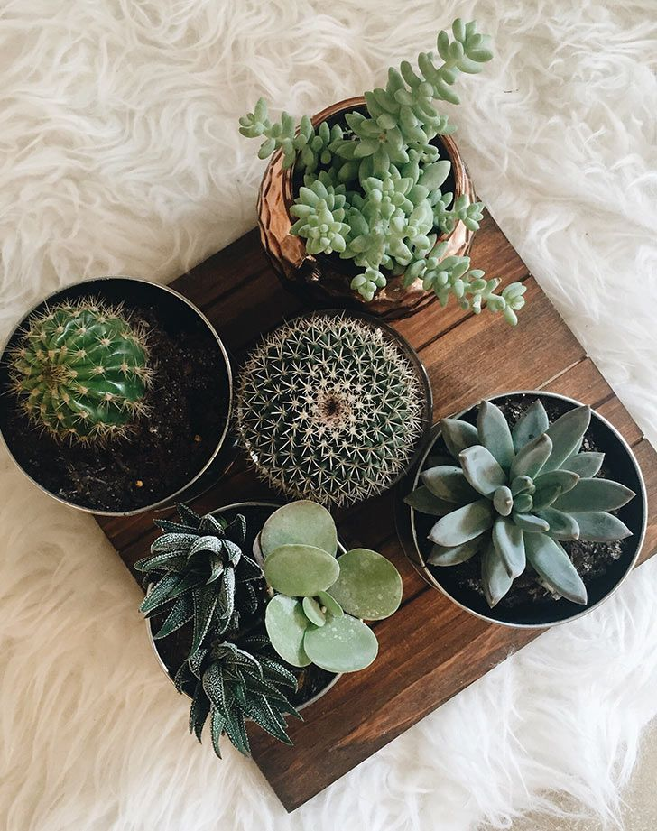 Indoor plants to make your place cosy and green!