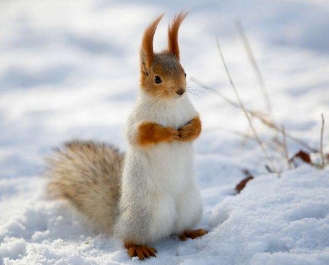 These squirrels always look surprised!