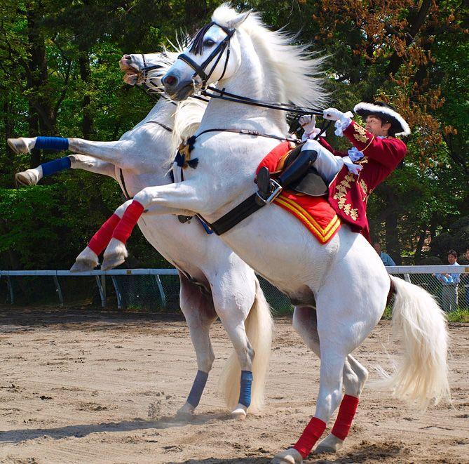 Calul andaluz (Pura Raza Española sau cal spaniol) este una dintre cele mai pure și mai vechi rase de cai. Face parte din grupa cailor iberici, respectiv a celor baroci și provine din regiunea spaniolă Andaluzia. Profilul clasic al acestui cal este gâtul convex, care se potrivește cu corpul său grațios, și totodată musculos. www.horseland.ro