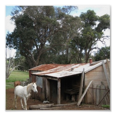 An old Australian shed and a white horse make up this poster
