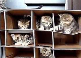 cute kittens playing in fort