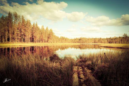 Fall,landscape shot from Volokinpolku, Sonkajärvi, Finland