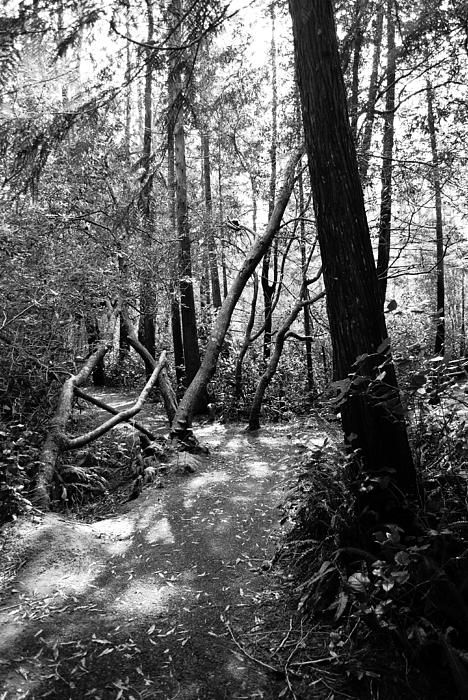 Wild Path by Michelle Myers ~ This was taken on the way to Darlingtonia Botanical Gardens on the Oregon Coast.
