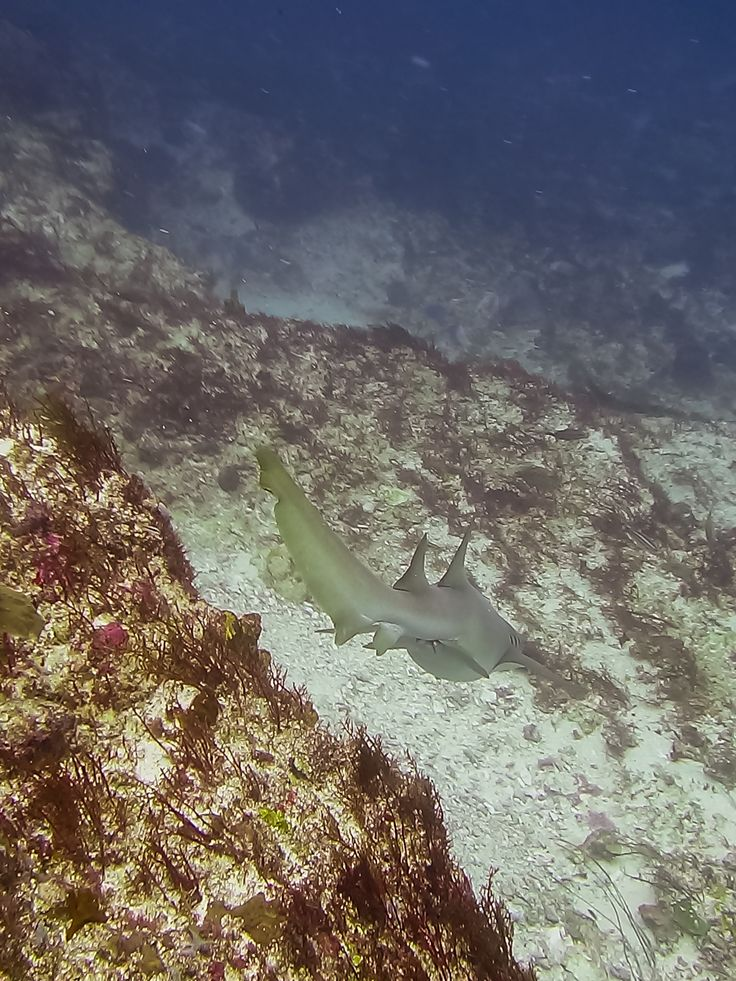 Layer Cake, an exciting new drift dive in the South of Carriacou