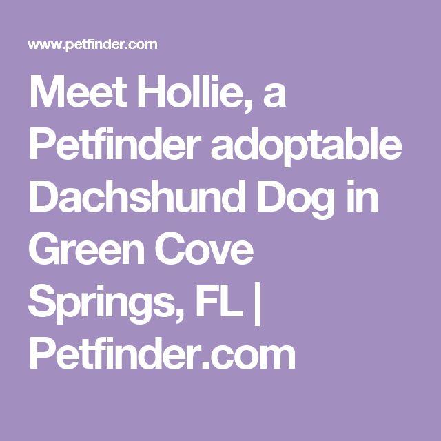 Meet Hollie, a Petfinder adoptable Dachshund Dog in Green Cove Springs, FL | Petfinder.com