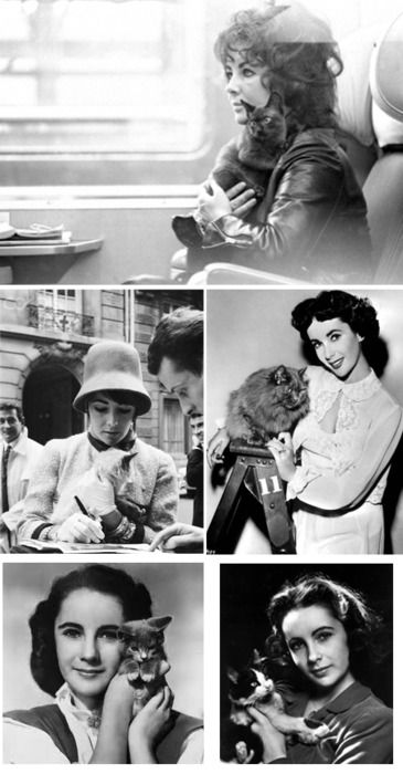 Liz Taylor and her cats