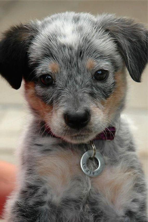 Tags pour animaux de compagnie par STAMPPED sur Etsy