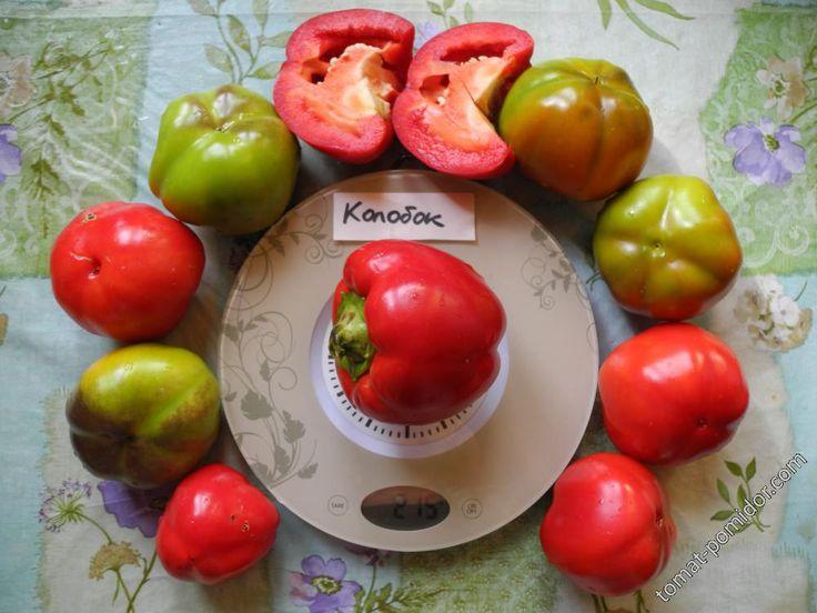 Форум - выращивание томатов, огород, дача - Колобок