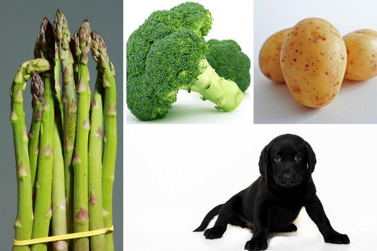 Gemüse für Hunde? Ja, roh füttern oder kochen?
