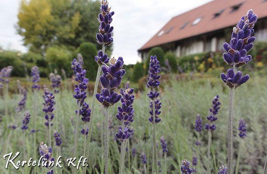 10 bevált növény, mellyel szépen díszítheted mediterrán kertedet.