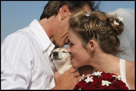 7be3e8e6827cb9c92407cd74d0629313  road trip pets - affordable beach weddings in southern california