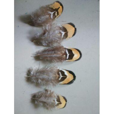 Перья фазана 5-8 см. 20 шт.