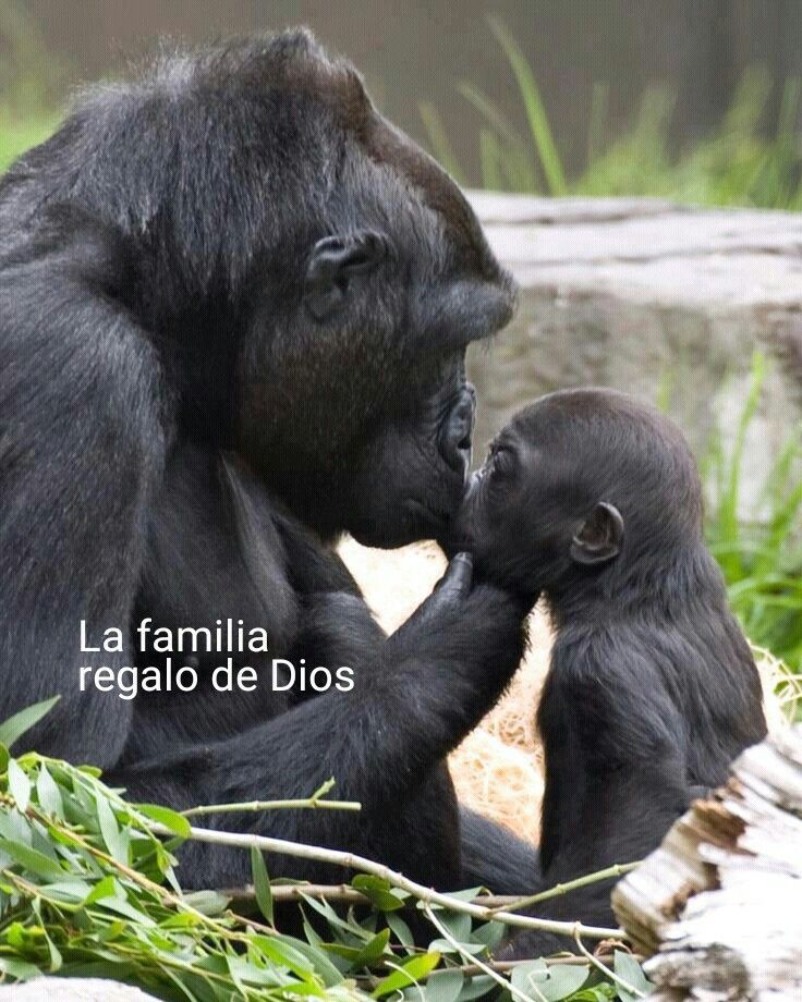 Que bello regalo de Dios es la familia