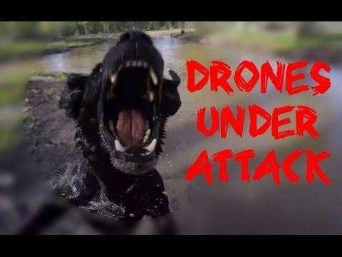 PhotographerTips DRONES UNDER ATTACK - Drone Fails - PhotographerTips
