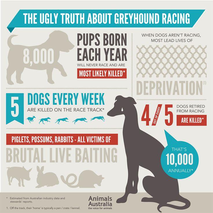 Megrázó adatok az ausztrál agárversenyekről egy infografikán  Agárversenyek Ausztráliában: évi 17.000 áldozat!  #kutya #dog #ausztrália #australia #agár #greyhound #verseny #race #greyhoundrace #kutyabaráthelyek #kutyabarathelyek