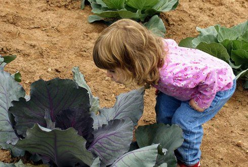 Zo vroeg mogelijk wennen aan groentesmaken - Wageningen UR