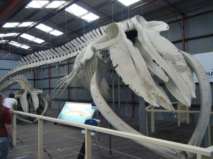 Albany, Western Australia's historic whaling station.