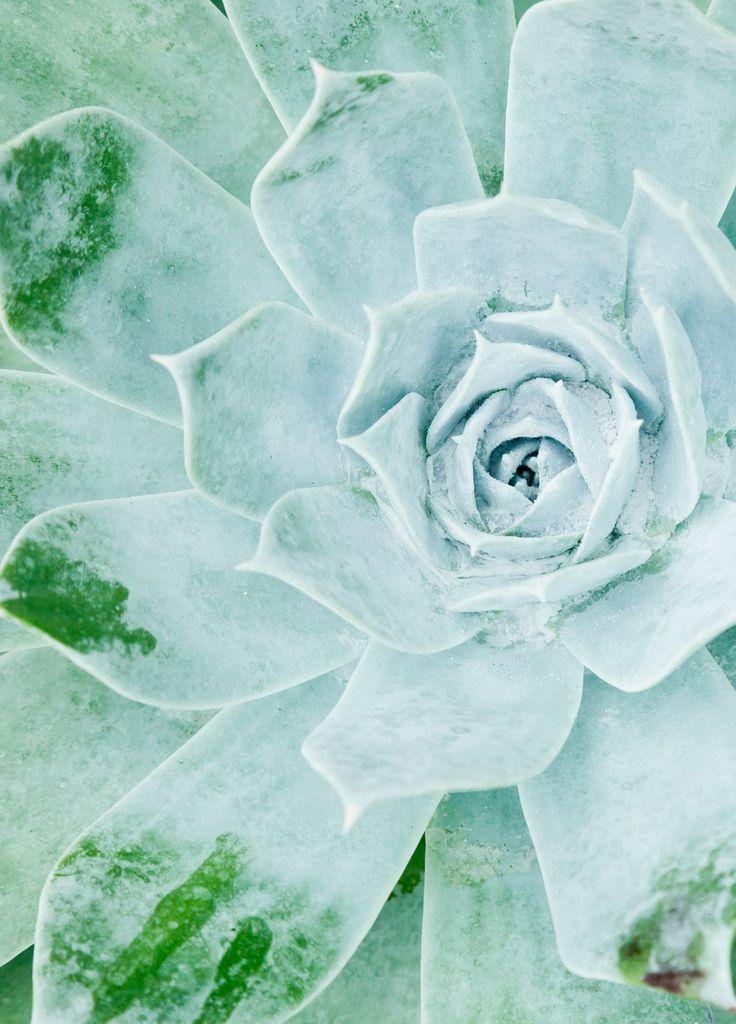 Bliv inspireret af grøn #inspirationdk #bolig #botanik #trend #boligtrend