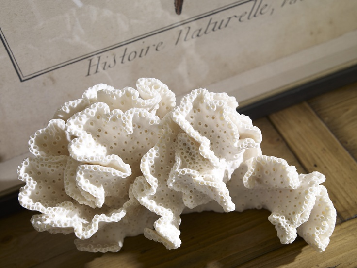 Our Antique Starfish artwork (behind coral) is printed on aged paper for the authentic appeal of an antique nature study.