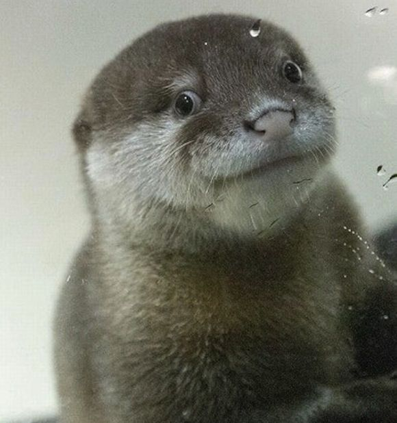 Live otter-cam to be broadcast for 33 hours — will otters' secret ...