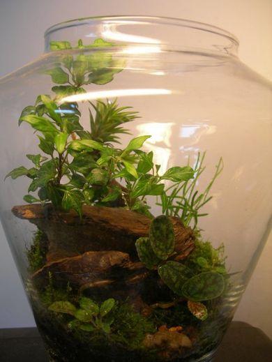 Где бы мне найти корягу? Флорариум, сад в бутылке.