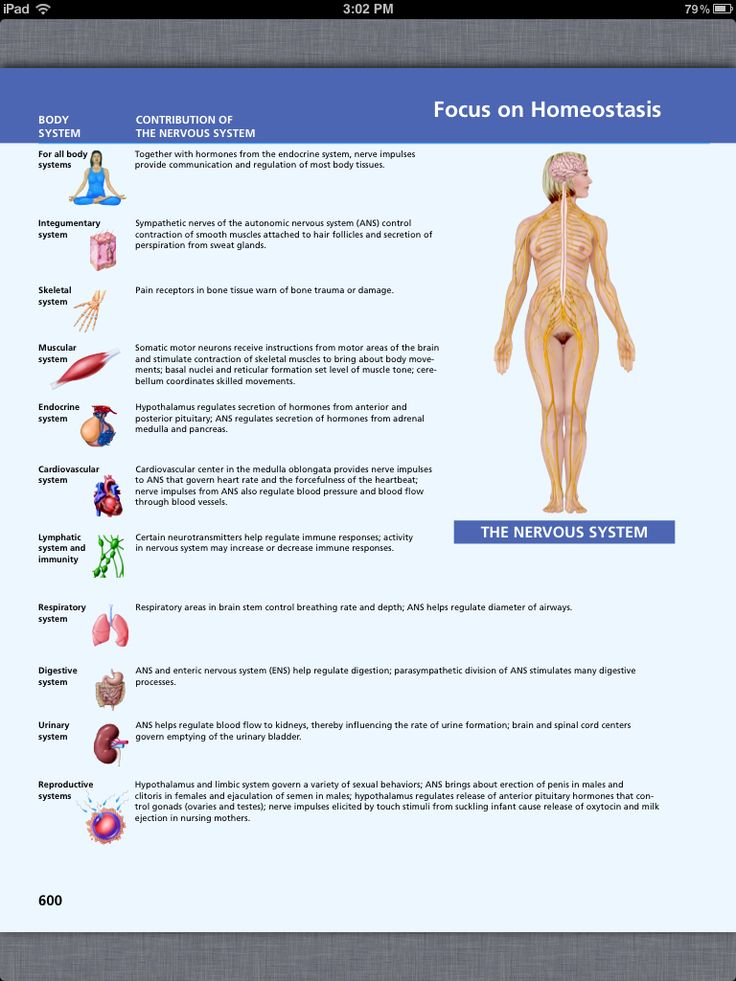 26 best Chapter 15, The Autonomic Nervous System images on Pinterest ...