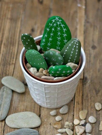Sassi cactus