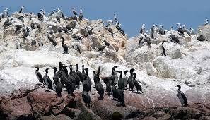 Resultado de imagen para fotos de la costa peruana