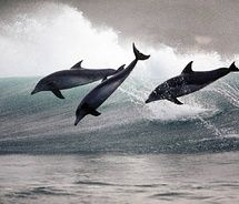 Pictures of the day : dolphins