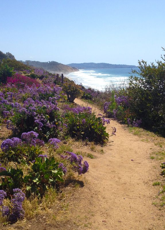 One of my favorite places to walk...on the cliffs above the beach in Del Mar.