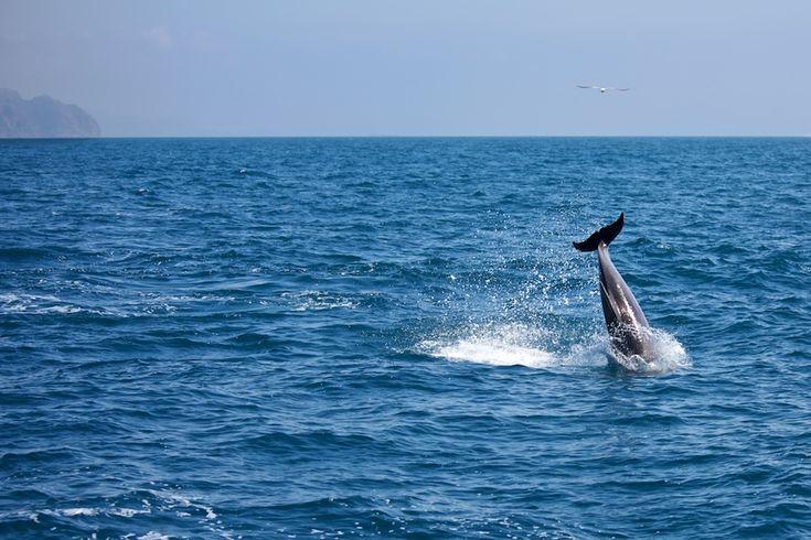 Cetáceos en el Mediterraneo