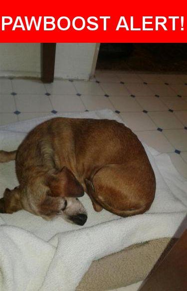 Please spread the word! Kiki was last seen in Jacksonville, FL 32205.    Nearest Address: 3029 College St, Jacksonville, FL, United States