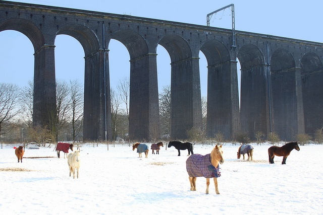 Horses under the viaduct in Welwyn, Herts- Ava loves going to see those horses