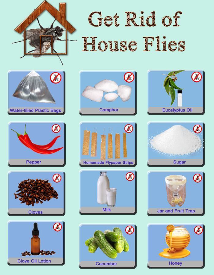 Home remedies to Stop and Control House Flies. pest control methods. Fruit fly traps to catch and kill flies. Get rid of House flies infestation naturally.