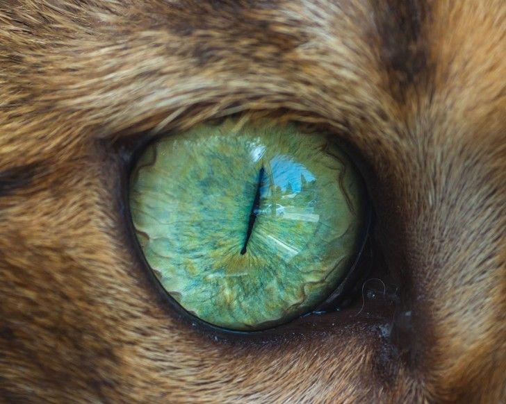 Hipnotyzujące kocie oczy na zdjęciach makro - ciekawe.org